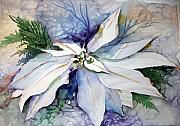 Mindy Newman Drawings - White Poinsettia by Mindy Newman