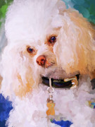 White Poodle Print by Jai Johnson