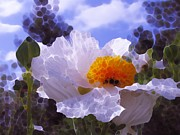 All - White Poppies Spring by Natalya Shvetsky