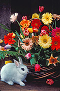 Baskets Photo Framed Prints - White rabbit by basket of flowers Framed Print by Garry Gay