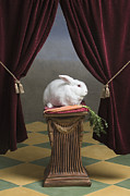 Tiled Framed Prints - White Rabbit Sitting On Pedestal With Carrot, Looking Away Framed Print by Rosanne Olson