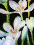 Flower Blooms Pastels Prints - White Rain Lilies Print by Emily Michaud