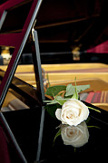 White Rose And Its Reflection Print by Corepics
