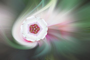Abstract Rose Digital Art - White Rose Petal Abstract by Linda Phelps