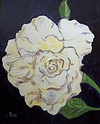 Floral Still Life Originals - White Rose by Pete Maier