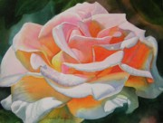 White Flower Paintings - White Rose with Orange Glow by Sharon Freeman