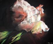 Pink Blossoms Pastels Posters - White Roses Poster by Beka Burns