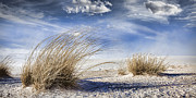 Wendy White Acrylic Prints - White Sands -3 Acrylic Print by Wendy White