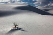 Desert Photography Posters - White Sands Poster by Keith Kapple