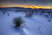 Desert Plants Photos - White Sands Sunset by Peter Tellone