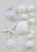Sea Life Art - White Shells by Daniel Hurst Photography