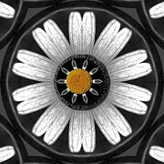 Yellow Black White Silver Prints - White shimmering flower Print by Pepita Selles