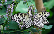 Blooms  Butterflies Photo Framed Prints - White Framed Print by Skip Willits