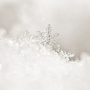 2011 Prints - White Snowflake Print by Bronze Riser