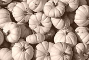 Farm Stand Art - White Squash by Kevin Fortier