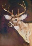 Hunting Pastels Framed Prints - White Tail Buck Framed Print by Debbie Anderson