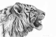 Profile Drawings Posters - White tiger - Pantera tigris tigris Poster by Svetlana Ledneva-Schukina