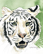 White Tiger Print by Mark Jennings
