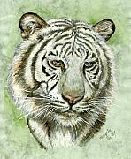 White Tiger Framed Prints - White Tiger Framed Print by Morgan Fitzsimons