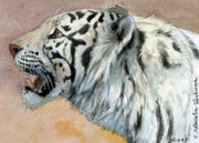 Rare Mixed Media Framed Prints - White Tigress aceo Framed Print by Svetlana Ledneva-Schukina