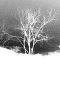 Isolated On Black Background Digital Art - White Tree  by Bou Lemon