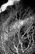 White Tree Wave Print by John Rizzuto