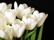 Flora Photo Originals - White Tulips 1 by Jessica Velasco