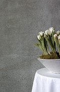 White Cloth Framed Prints - White tulips in bowl - gray concrete wall Framed Print by Matthias Hauser