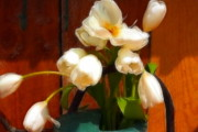 Watering Can Mixed Media - White Tulips Watering Can  by Marjorie Imbeau
