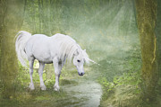 White Unicorn Photos - White Unicorn at the Water by Ethiriel  Photography