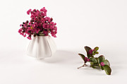 Still Image Prints - White Vase And Pink Flowers Print by Catherine Lau