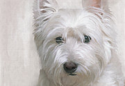 Close Up Painting Metal Prints - White West Highland Terrier Westie Metal Print by Gael Keevil