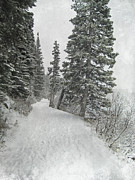 Winter Storm Photos - White Winter Path by Andrea Hazel Ihlefeld