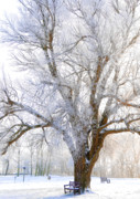 Wooden Mixed Media Metal Prints - White Winter Tree Metal Print by Svetlana Sewell