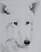 Wolf Pastels Framed Prints - White Wolf Framed Print by Sherri Strikwerda