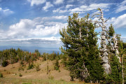 Crater Lake Posters - Whitebark Pine trees Overlooking Crater Lake - Oregon Poster by Christine Till