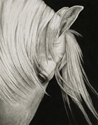 White Horse Paintings - Whitefall by Pat Erickson