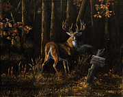 Sporting Art Prints - Whitetail at the edge Print by Scott Thompson