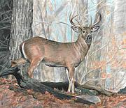 Whitetail Buck Print by Carla Kurt