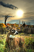 Whitetail Deer Posters - Whitetail Dawning Poster by Emily Stauring