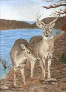 Doe Drawings Posters - Whitetail Deer at Lake Wilson Poster by Courtney Trimble