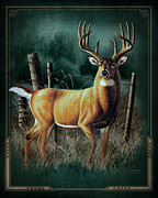 Antlers Framed Prints - Whitetail Deer Framed Print by JQ Licensing