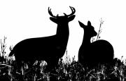 Deer Silhouette Digital Art - Whitetail Deer in the Meadow by Dustie Meads