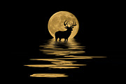 Reflecting Water Mixed Media Prints - Whitetail Deer in the Moonlight Print by Shane Bechler