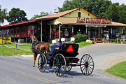 Amish Buggy Photos - Who Is Watching Whom by Dan Myers