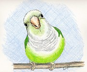 Monk Parakeet Painting Prints - Who Me Print by Laurilee Taylor