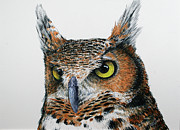 Owl Picture Framed Prints - Who me Framed Print by William Tockes