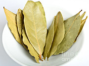 Treatment Framed Prints - Whole Bay Leaves Framed Print by Photo Researchers