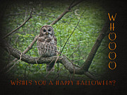Whoooo Wishes  You A Happy Halloween - Greeting Card - Owl Print by Mother Nature