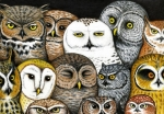 Owls Drawings - Whos Hoo by Don McMahon